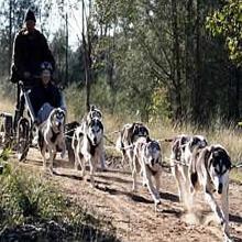 Siberisch Husky rennen
