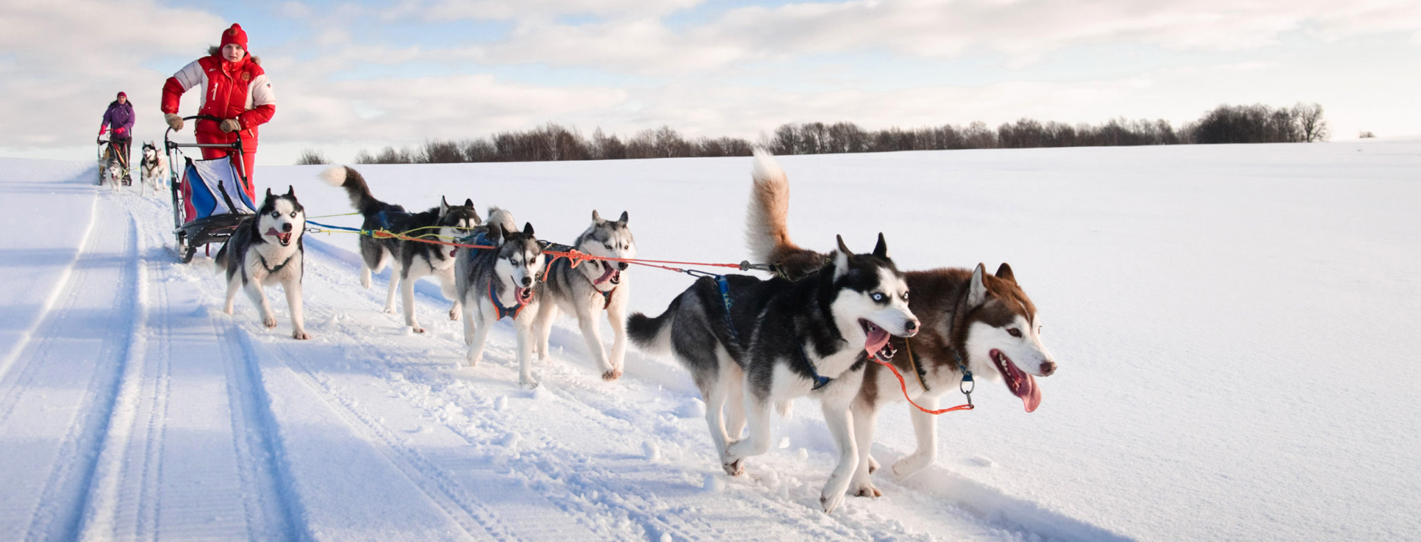 dog sledding - 1200×493